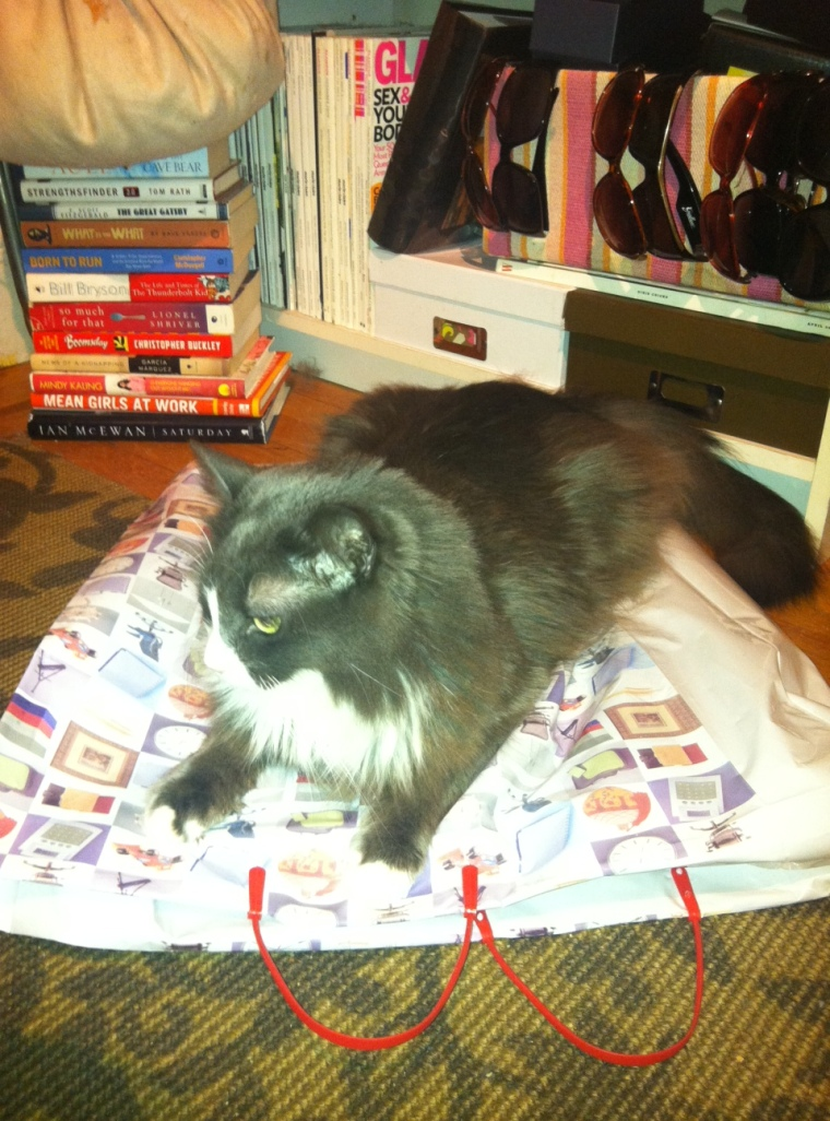 It's hard to wrap gifts when this cutie keeps distracting me. And sitting on my supplies.