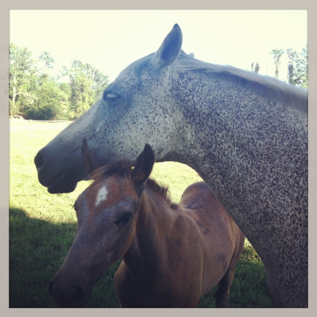 ^^ A mom and baby horse at the Warwick Valley Winery & Distillery.