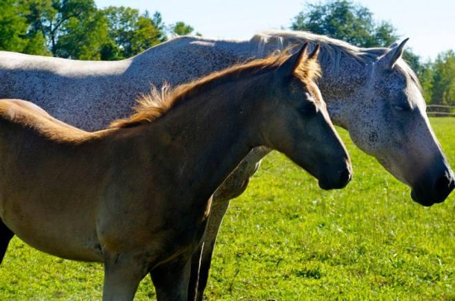 both_horses