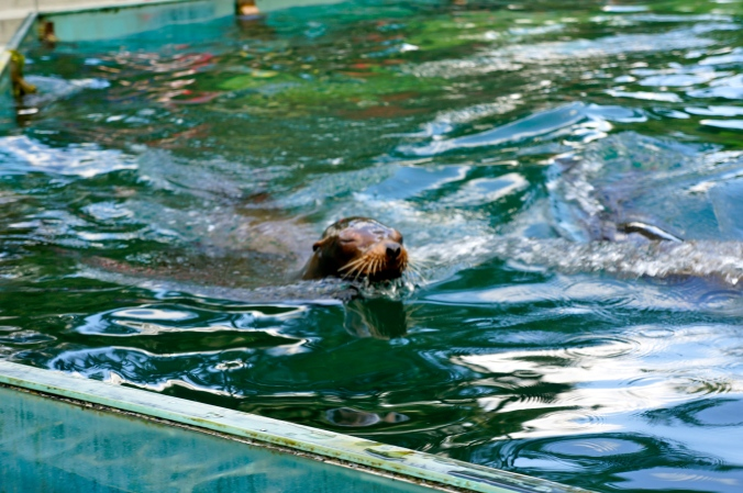 ^^The seals put on a cute little show at certain points during the day. You know, cause they're awesome.