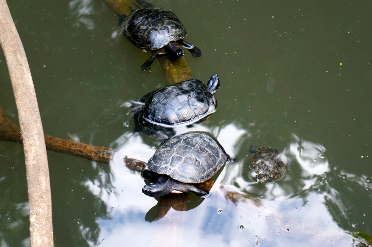 ^^These cute turtles reminded me of the one we have at home. His name is Marty, and he's a Red-eared slider.