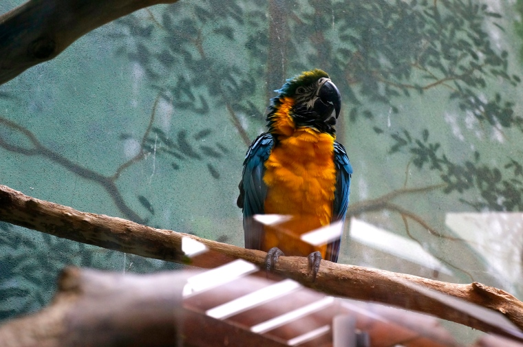 ^^ This little guy reminded me of 'Rainbow Brite,' one of my favorite movies as a kid.