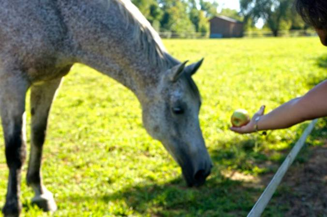 ^^We fed some of our contraband apples to the horses.