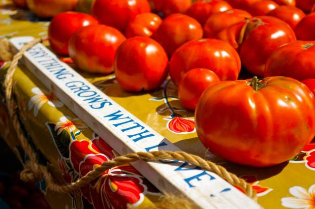 ripe_tomatoes
