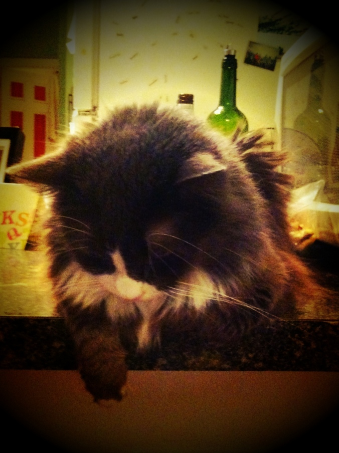 ^^ Of course I'd be remiss if I didn't mention the other two members of our little family -- Penelope the cat, and ...