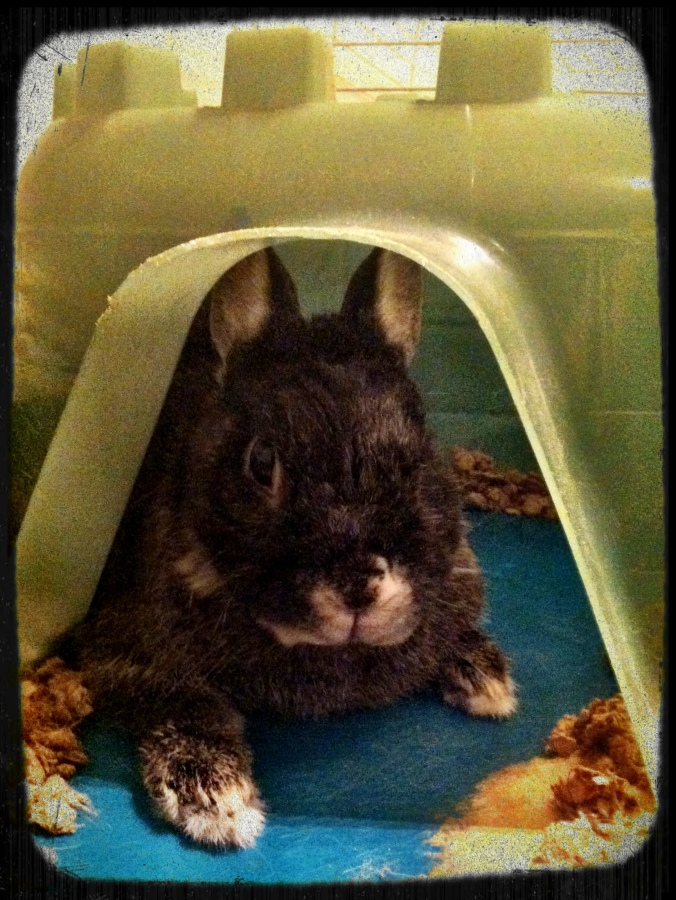 ^^ Nugget, the old man bunny