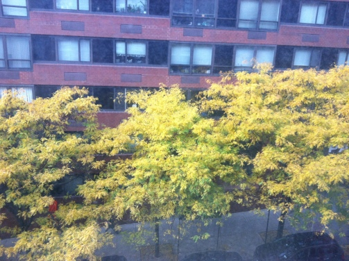 ^^ Even the leaves right outside our bedroom window are putting on a show.