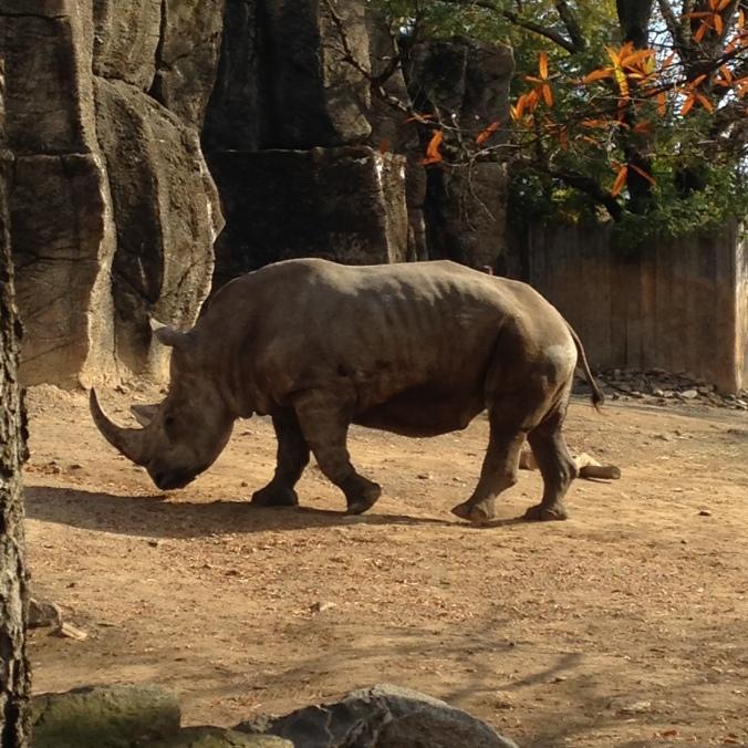 ^^ Rhino!