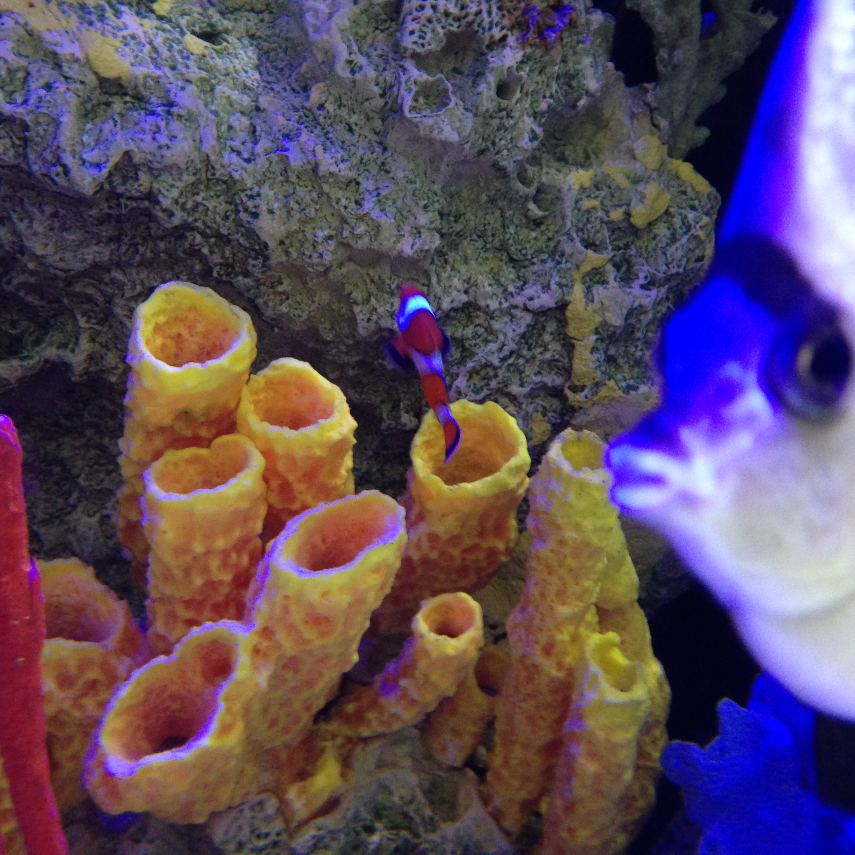 The philadelphia zoo weary wanderer for Little fish philadelphia