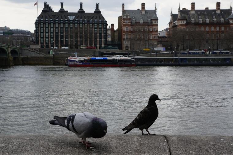 Pigeons_London
