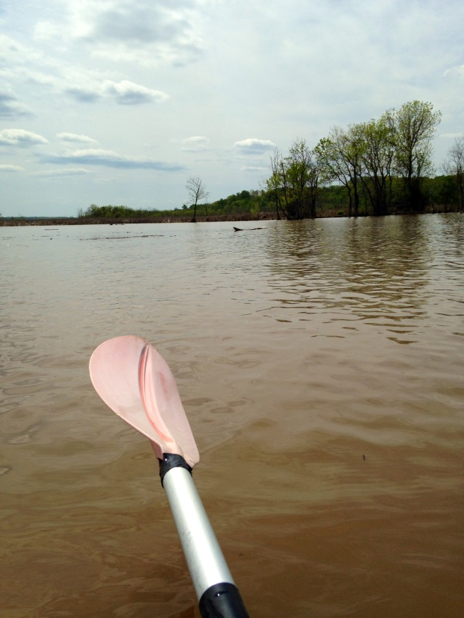 7Paddle_View