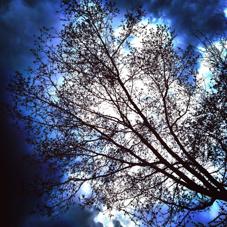Rain_Tree
