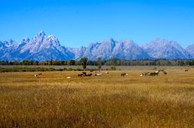 Wyoming Countryside