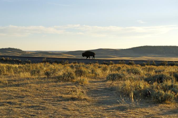 07_Yellowstone