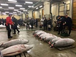 Super early morning Tuna Market viewing.