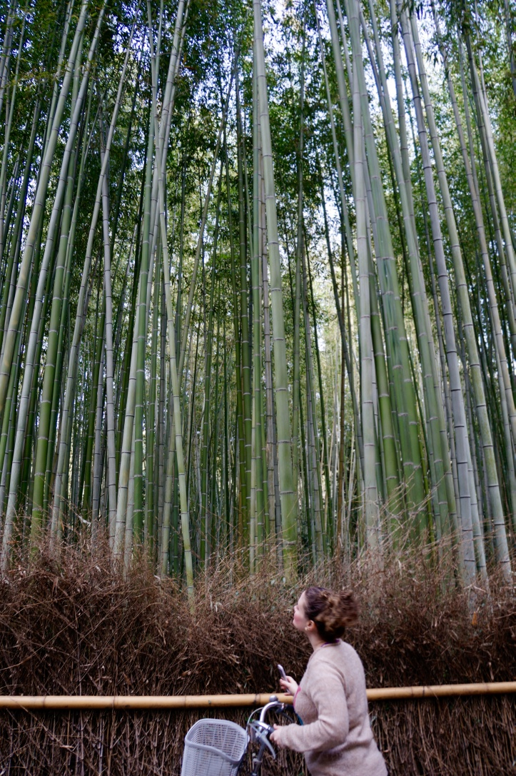 kyoto_trees