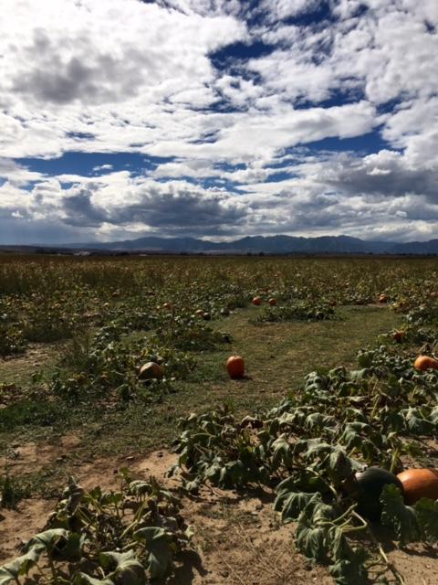 1_pumpkinfarm