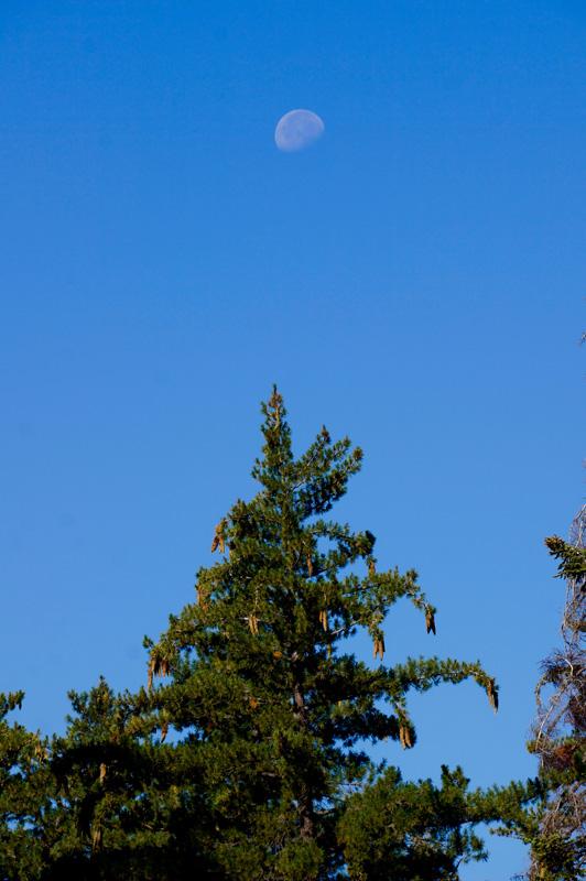 07_Sequoia