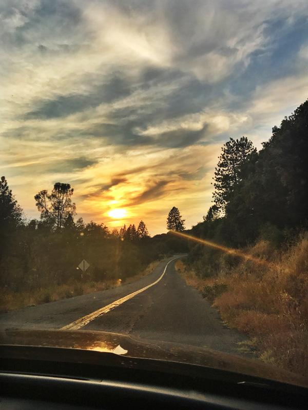 14_SequoiaNight