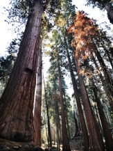 Sequoia National Park, San Francisco